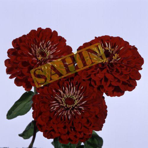 Catalogue K Sahin Zaden B V